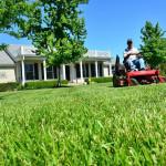 Gnojilo za travo s čim manj dušika