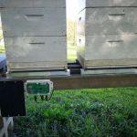 Nov način za merjenje teže čebeljih kolonij